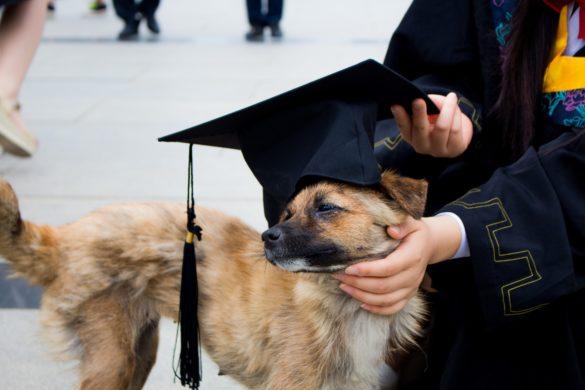 Hund mit Absolventenhut