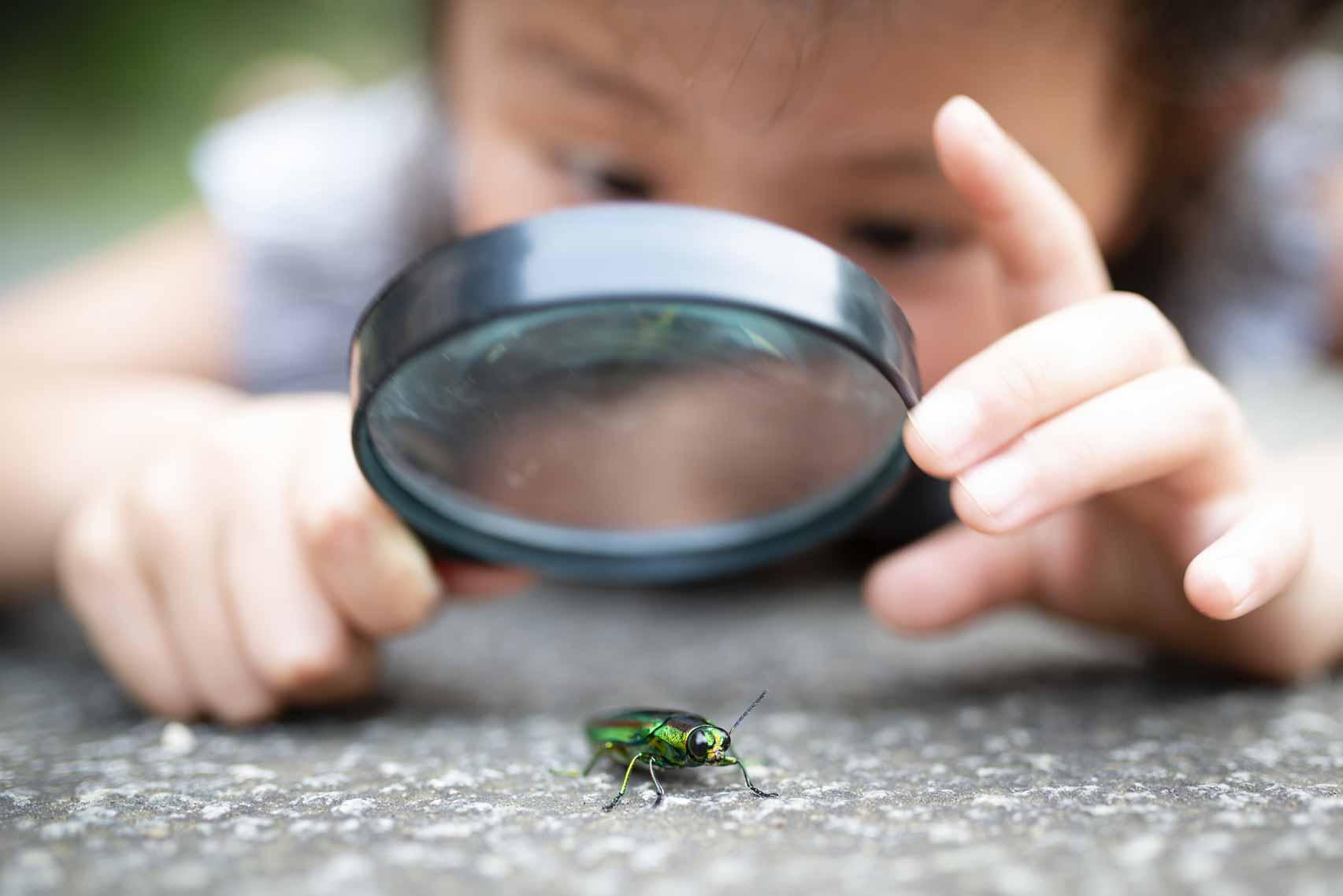 Ein kleines Kind untersucht einen Käfer mit einer Lupe.