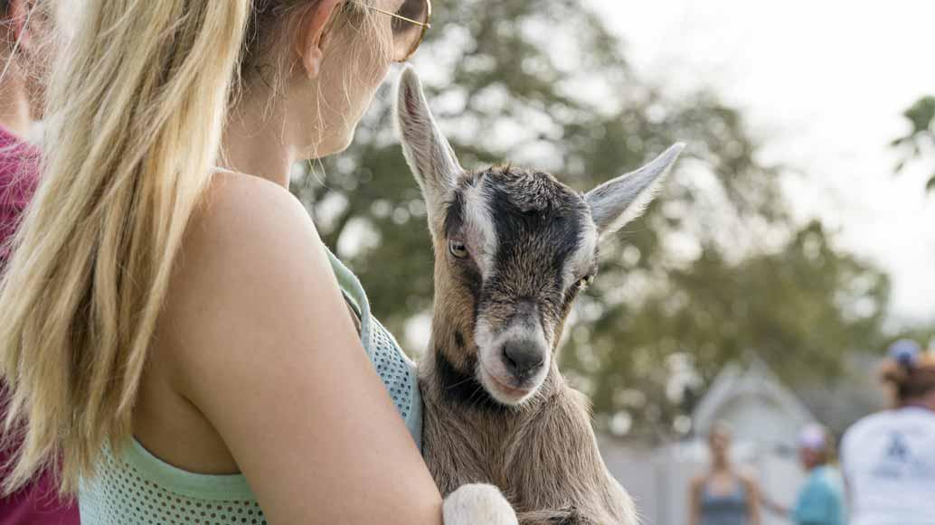Eine junge Studentin mit einer Ziege beim Goat Yoga.