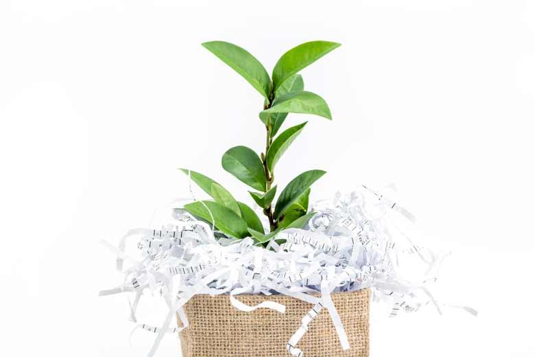 Eine Pflanze wächst aus einem Papierkorb mit geschreddertem Papier