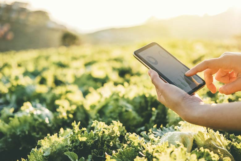 Smart Farming mit einem Tablet