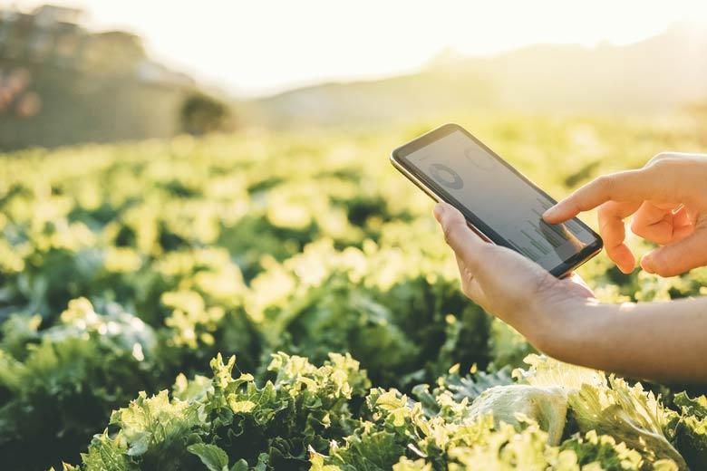 Smart Farming mit einem Tablet