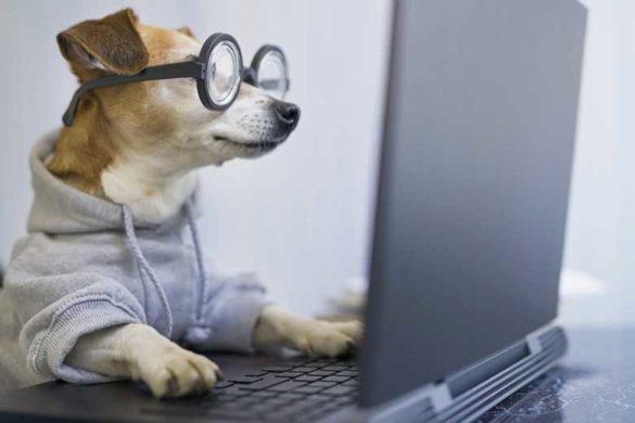 Kleiner Hund mit Brille am Laptop bei der Google Suche.