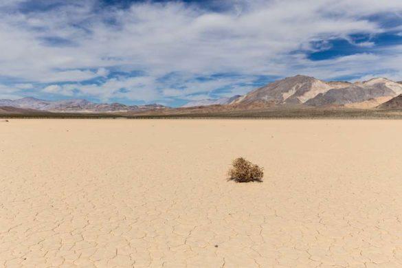 Dürre in einer Steppe
