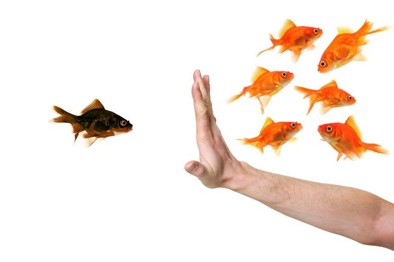 Einem Fisch wird der Zugang verwehrt