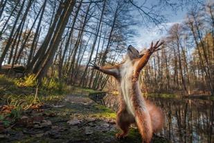 Eichhörnchen im Welt möchte die Welt umarmen
