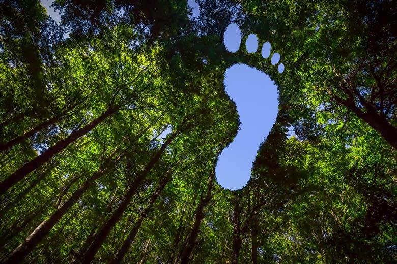 Grüner Fußabdruck im Blätterdach