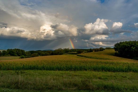 Natur Landschaft Maisfeld mit Regenbogen im Hintergrund